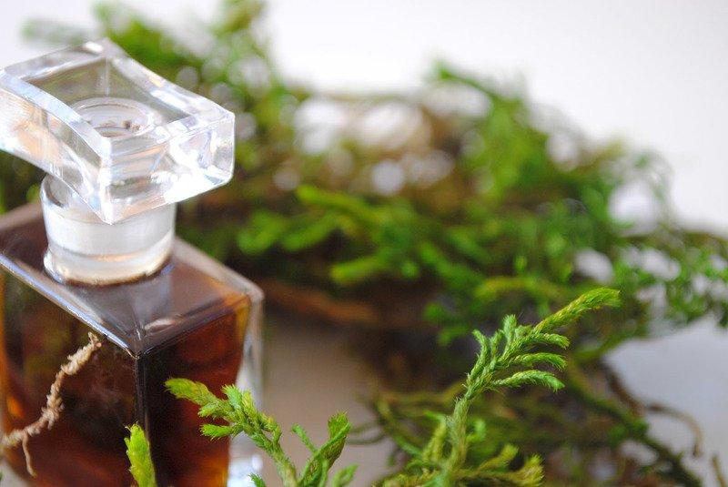 Шипровые ароматы для женщин - что это такое в парфюмерии - женские духи от  AromaCODE