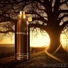 Montale Aoud Forest - Montale Aoud Forest